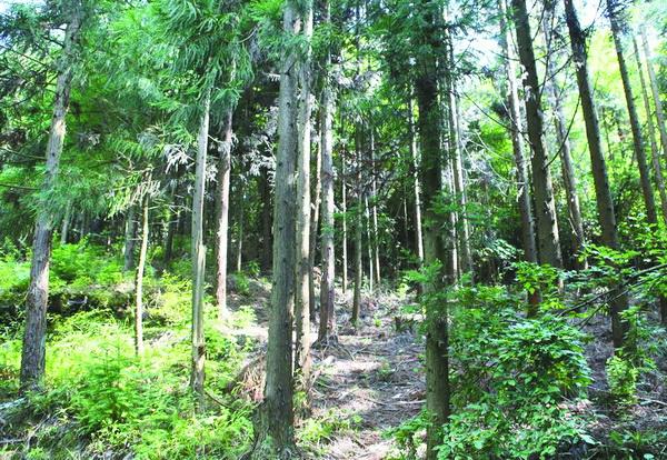 万源黑宝山对准国度级丛林公园