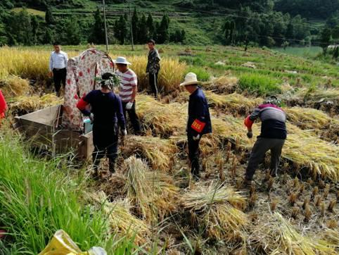 万源林园局党员突击队为贫困户抢收水稻