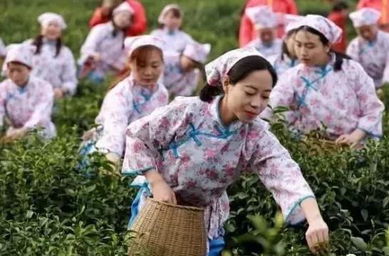世外茶源慢煮时光  我在云峰茶谷等您