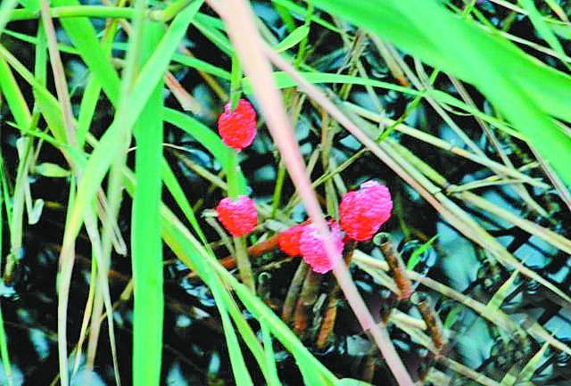 """天!莲花湖湿地公园这些粉红色的""""花""""竟然是……"""