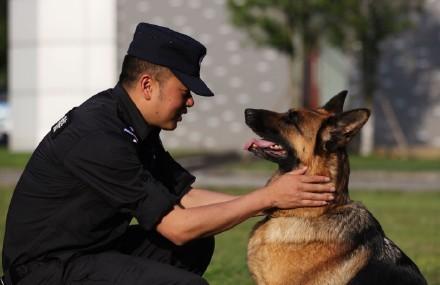 达州日报社全媒体记者探秘达州市警犬基地