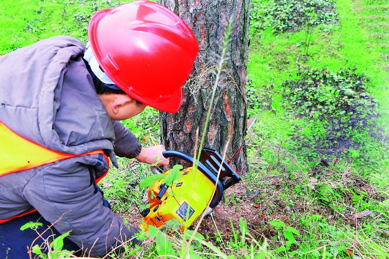 36万亩土地上的48万余株松树面临枯死!一场以中心城区为主的松材线虫病防控歼灭战正在紧张开展