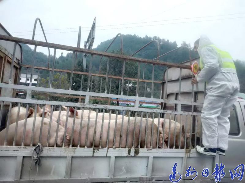 20日起,达城不再出售新鲜猪肉?猪肉将无法邮寄?真相是这样的……