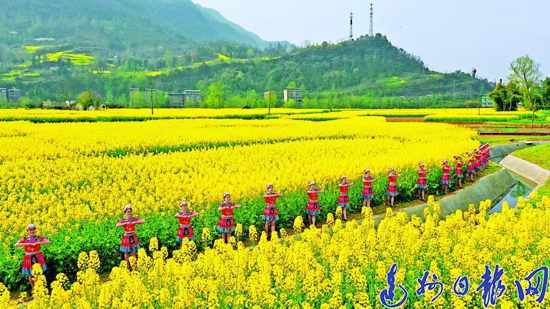 阳春三月 油菜花黄