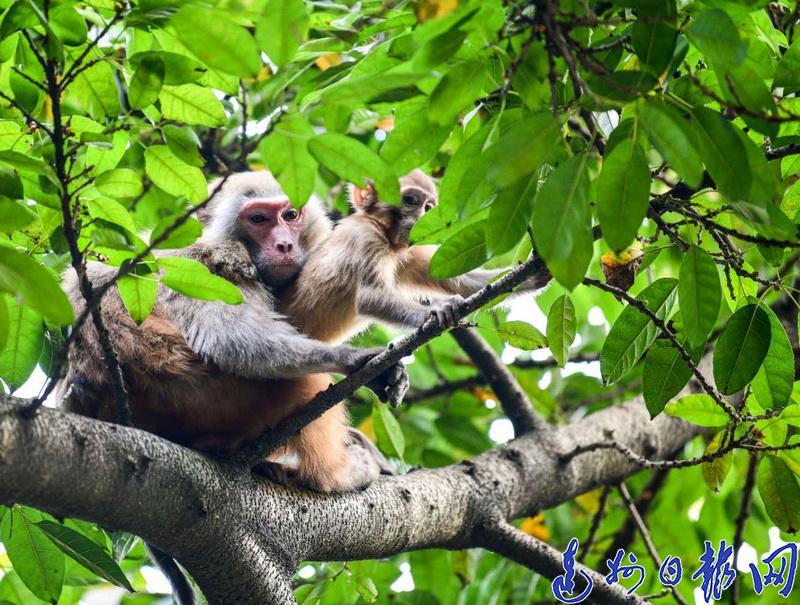 神马情况?凤凰山游乐场附近惊现两只流浪猴觅食