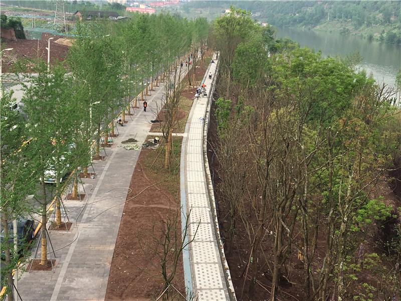 预计5月底建成开放!塔沱湿地公园三期已进入收尾阶段!