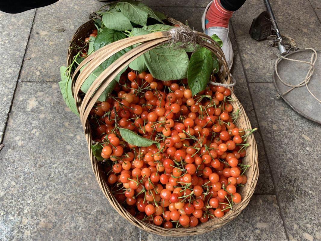 20元一斤!本地樱桃上市,你尝鲜了吗?