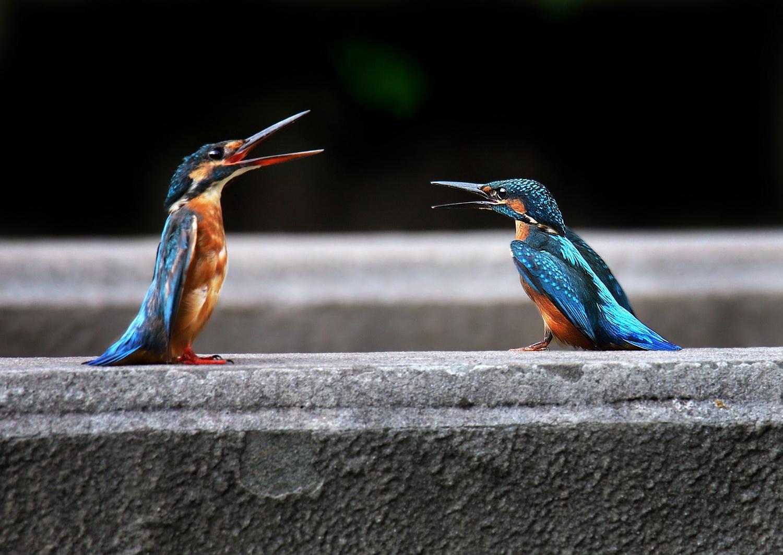 家门口也能拍到珍稀鸟类!达州这群老人用镜头展现绿色家园