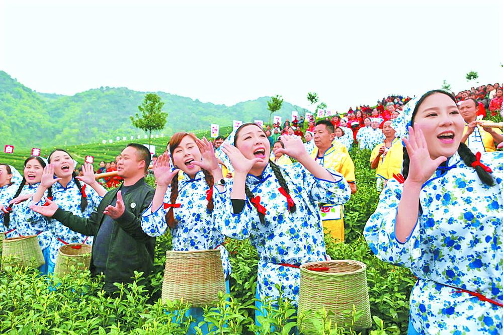 大竹成立白茶产业协会整合优质资源 形成品牌效应