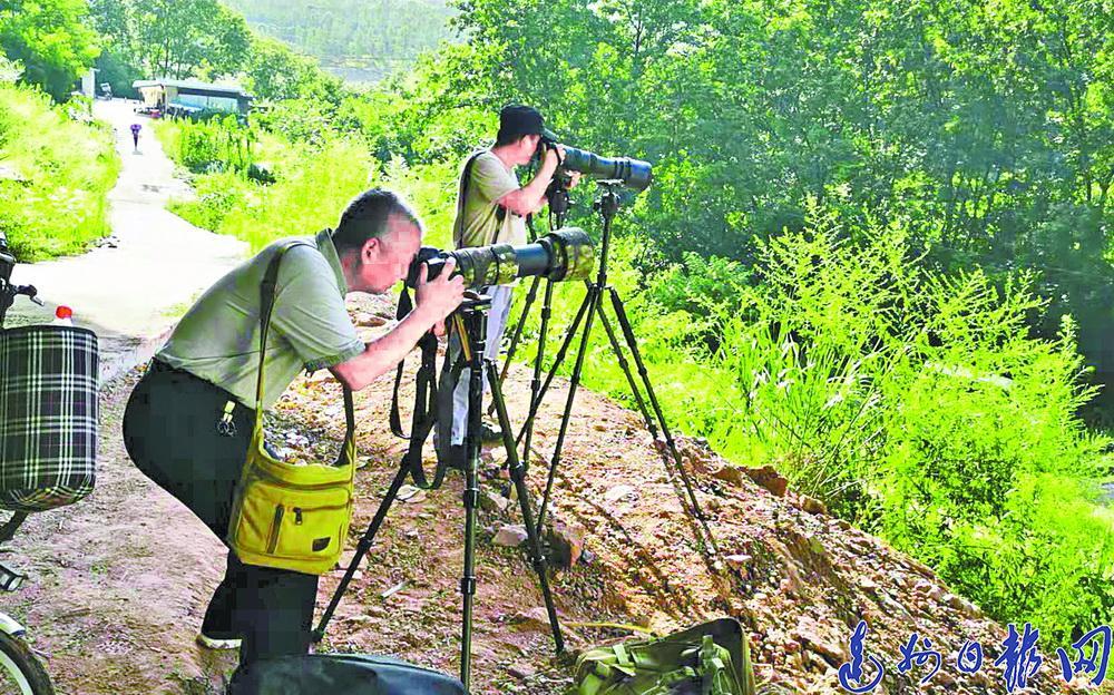 """经开区临江村来了6只红嘴蓝鹊,专门去拍他们的摄影师却""""桑心""""了"""