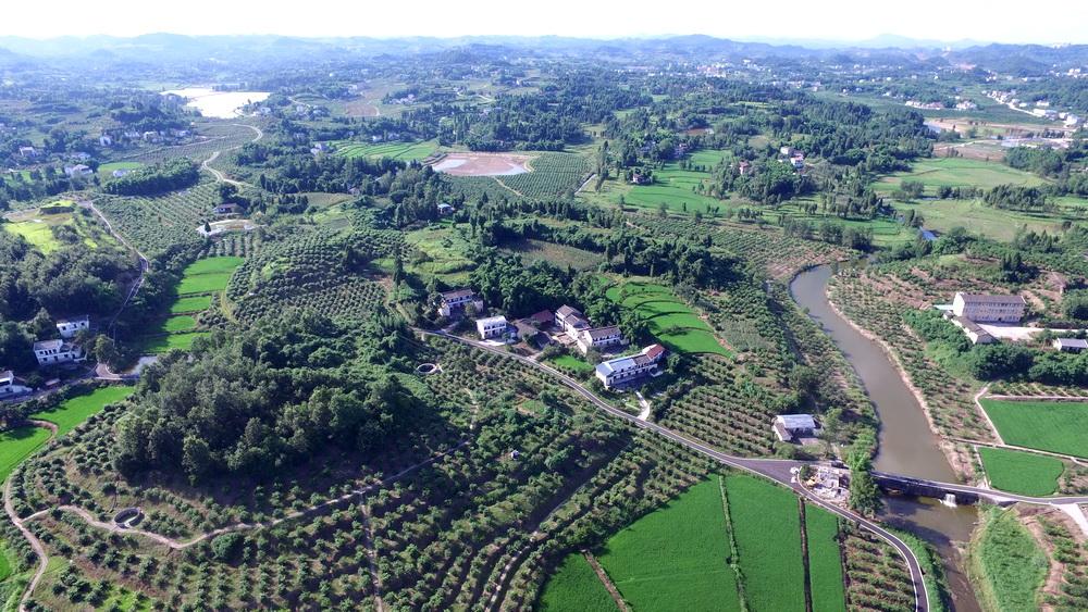 让田野生长希望!来自渠县现代农业发展的报告(上)