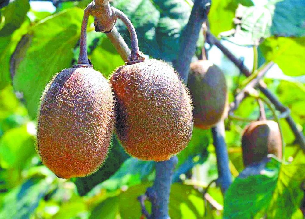 达州瓜果分外香,盛夏的果实等你来采摘!