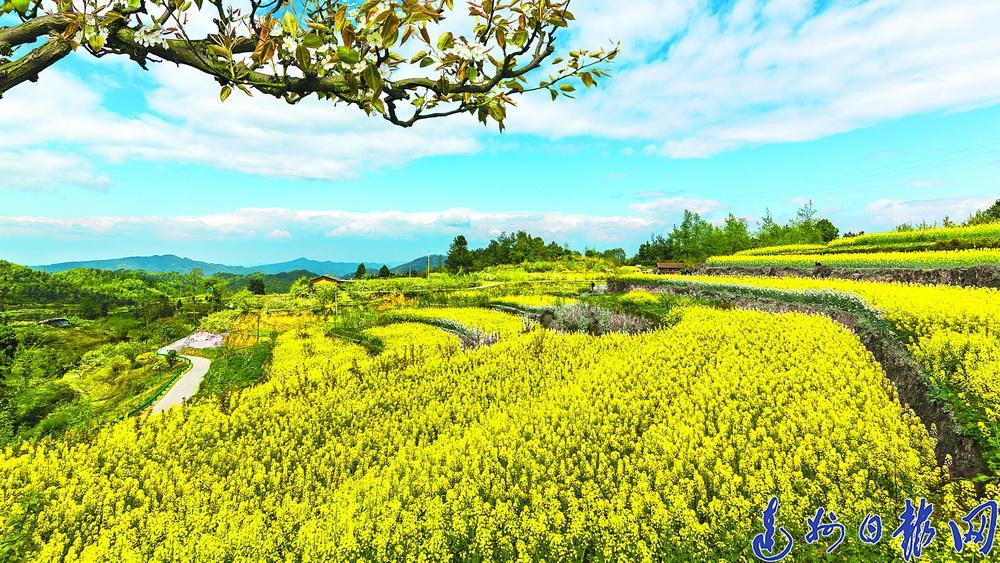 【中国农民丰收节】通川区推进现代农业高质量发展纪实