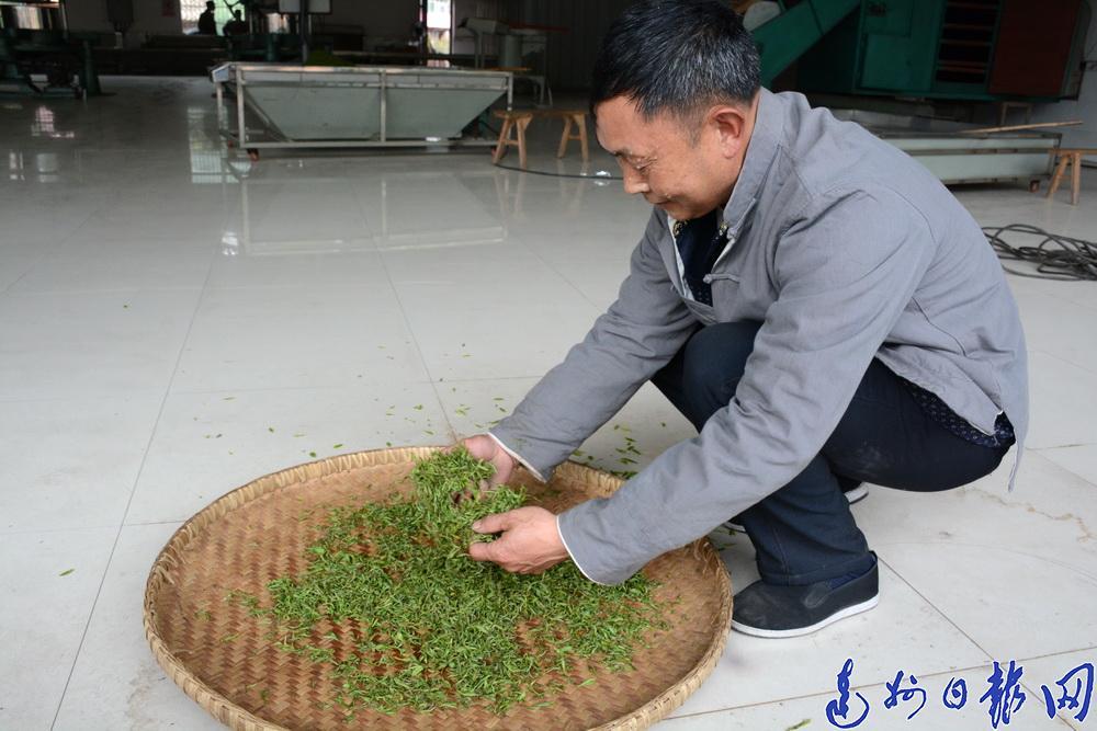 """高山里蹚出一条茶叶致富路!""""最美新农人""""候选人唐斌"""