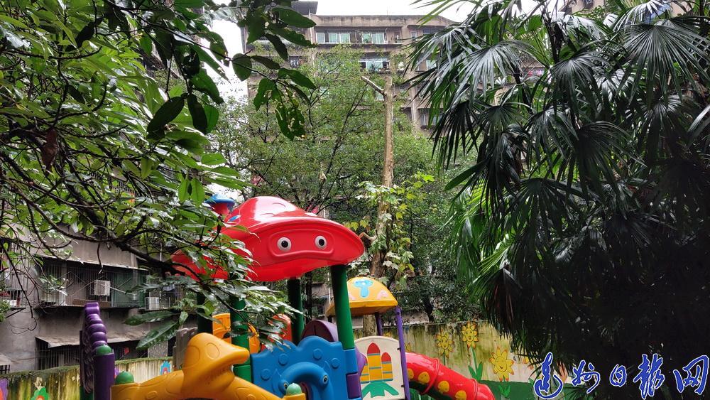 高达三四十米!通川区红风车幼儿园门前这两棵大树太危险…