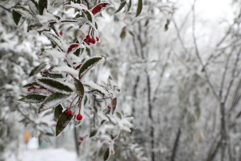 下雪啦!达州迎来今冬首场大规模降雪,比往年来得稍晚一些