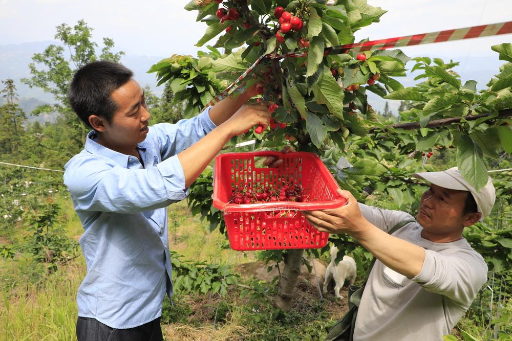 宣汉县东西部扶贫协作产业合作结出硕果