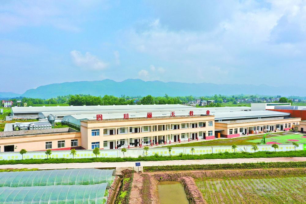 达川区全力推进生猪产业协同快速发展纪实