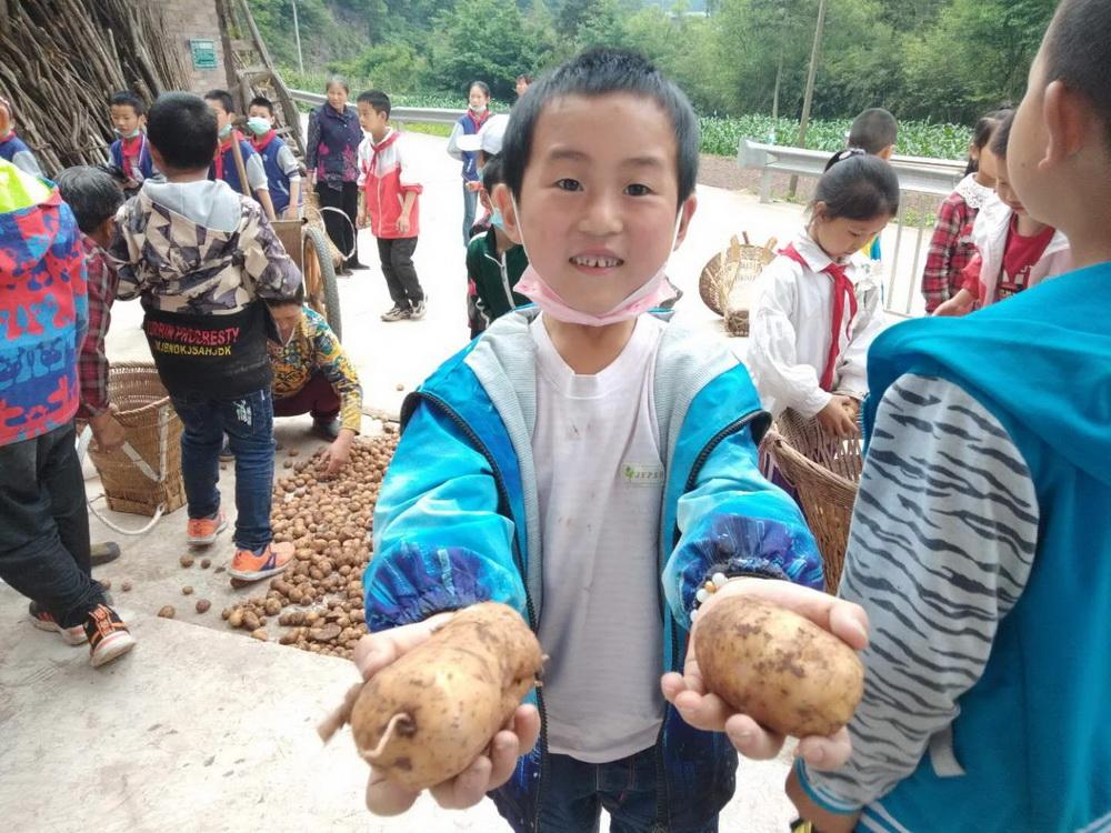我们种的土豆成熟了