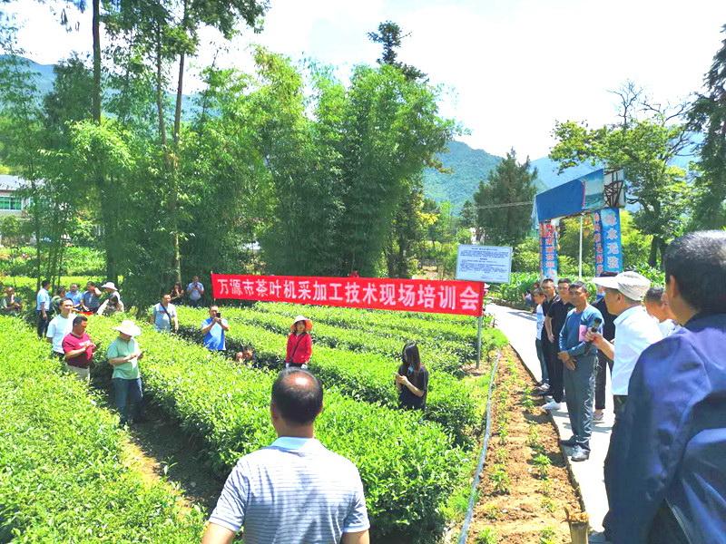 加快茶园建设助力农民增收