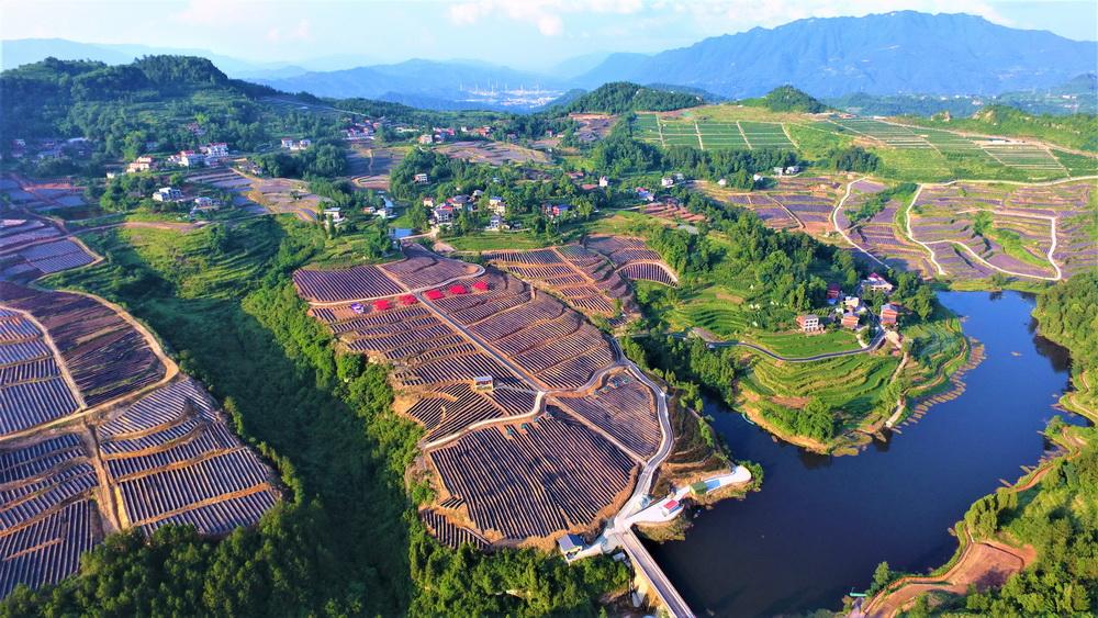 双河镇大田村投资兴建农旅融合发展蓝莓基地