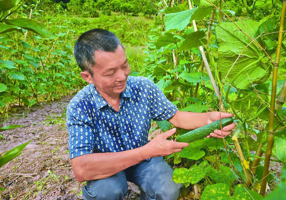 大竹县着力培育新型农业经营主体