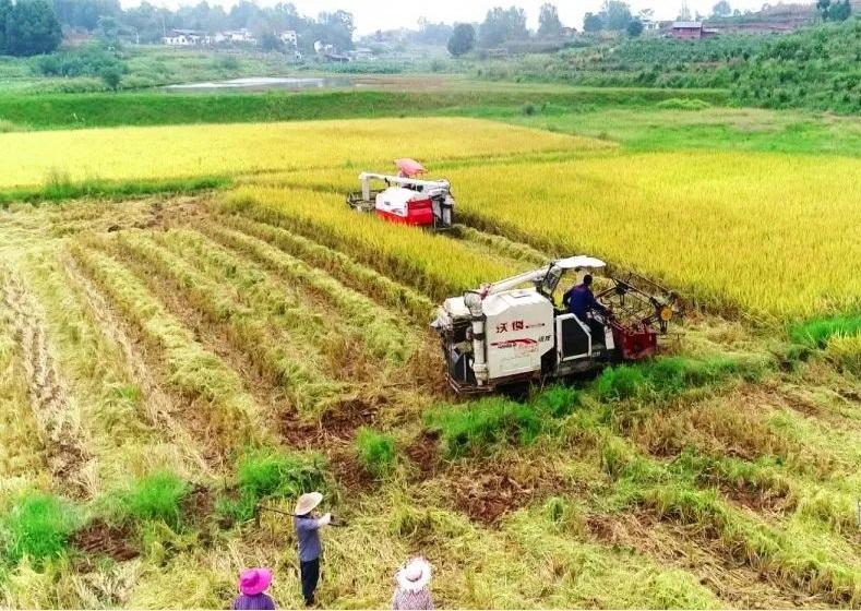 150余台农机助力宣汉水稻收割