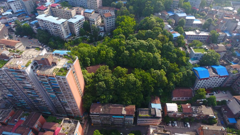 完善市政设施 改善人居环境!万源着力打造生态宜居至美城市