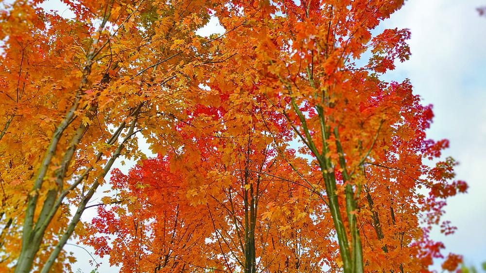 再不去就晚了!这里藏着达城最美的秋天