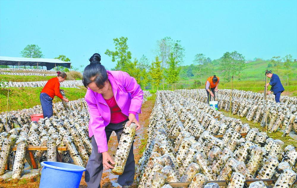 大竹县拓展农产品销售渠道,助力贫困群众增收