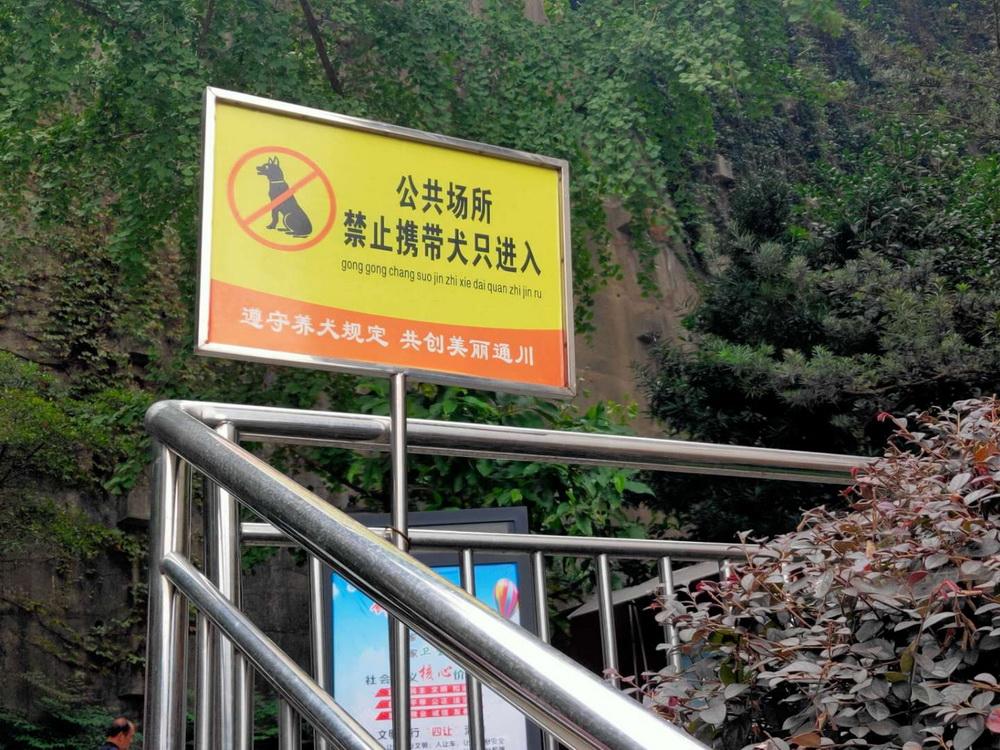 """记者走访达城部分小区:不文明养犬问题有了""""最优解"""""""