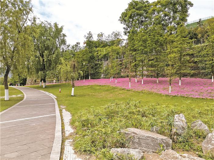 有阳光就灿烂 塔沱湿地公园酢浆草花海绽放