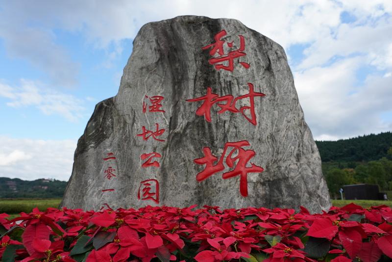 喜迎国庆 13万余株鲜花扮靓达州高新区
