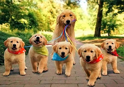 最萌的狗_世界上最可爱的狗排名,世界十大最萌的狗排行榜 图片 探秘志