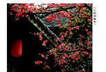 《小院的春天》(摄影)杨泽云 摄