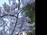 最美人间四月天 淡季出游慢叹芳菲
